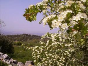 Vista desde el Mirador de los Tajillos en Estepa