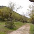 Se puede acceder desde el manantial de Roya o desde una entrada en la carretera Estepa-Gilena. Un paraje muy bonito, en especial cuando florecen los almendros.