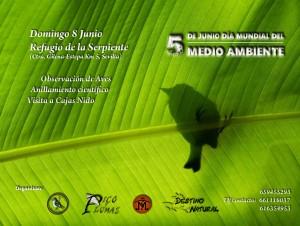 Celebración del Día Mundial de Medioambiente en Estepa