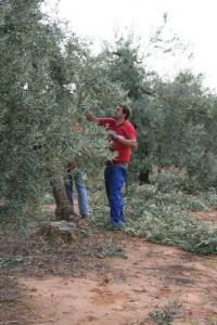 Nuevo curso de poda del olivo en Estepa