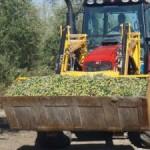 La Ministra de Agricultura inaugura la campaña oleícola 2014/2015 en Estepa