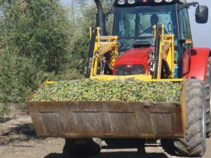ministra-agricultura-estepa-sevilla-isabel-garcia-tejerina-Andalucía-olivo-oleoestepa