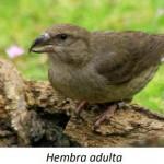 El curioso Piquituerto común y su vida entre Gilena y Estepa