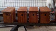 El Área de Parques y Jardines del Ayuntamiento de Estepa y el Grupo Ornitológico Zamalla ha instalado cajas nido para aves en sus zonas verdes para ayudar a combatir las plagas y evitar el uso de productos fitosanitarios.