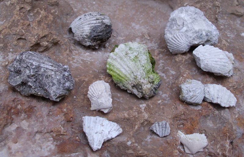 Restos de conchas marinas en Los Canterones, Estepa