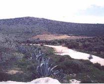 Cañada Honda, senderismo en Estepa