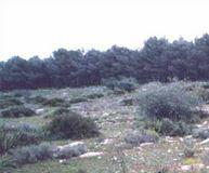 Las Llanadas, senderismo en Estepa